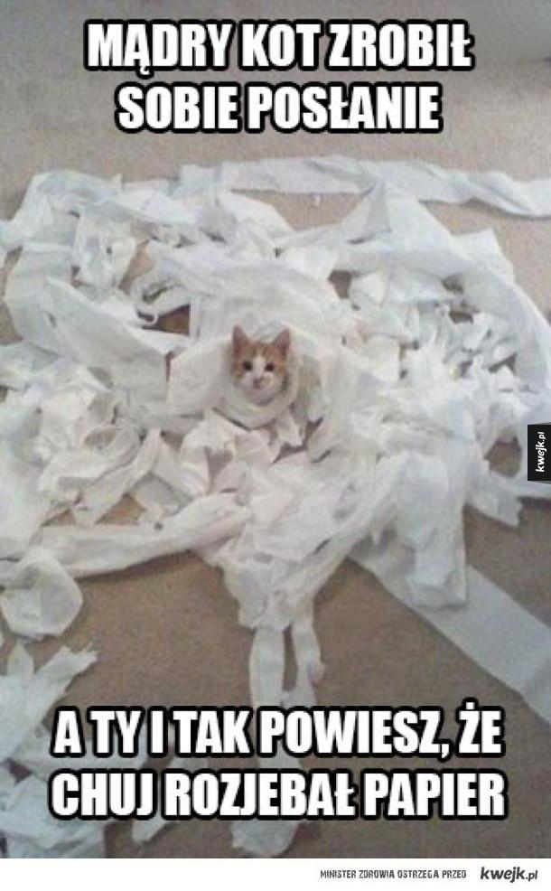 Mądry kot