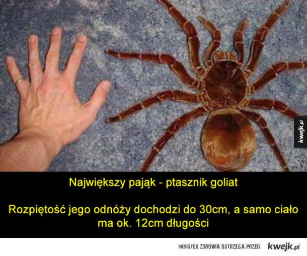 Naturalne rekordy wielkości