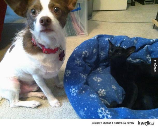 Psie posłanka vs koty