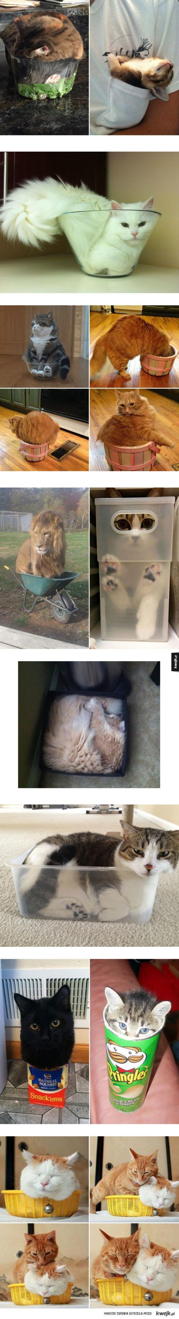 Koty to płyny
