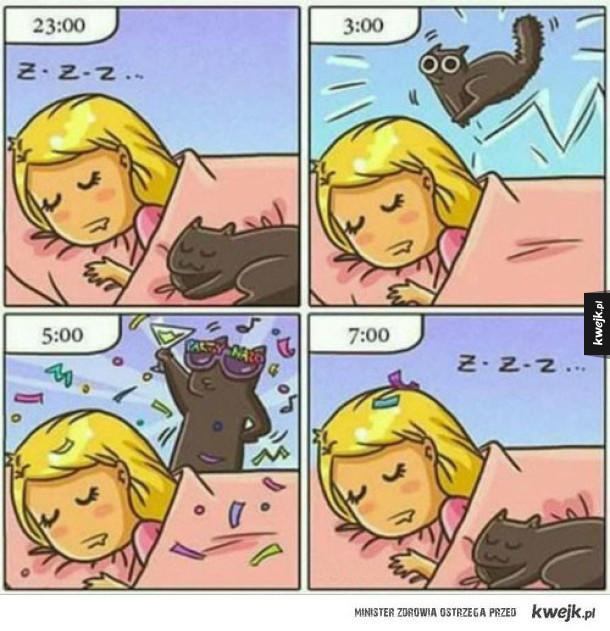 Dlatego koty śpią w dzień