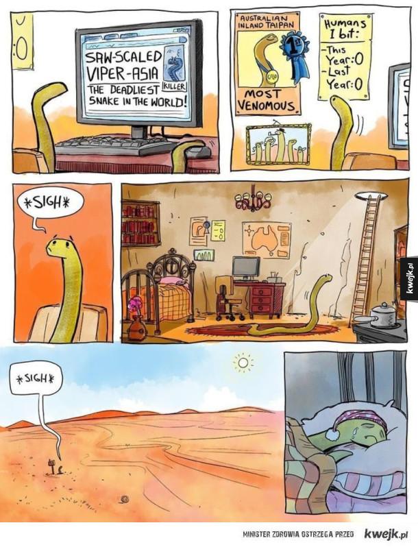 Nowy najbardziej jadowity wąż na świecie