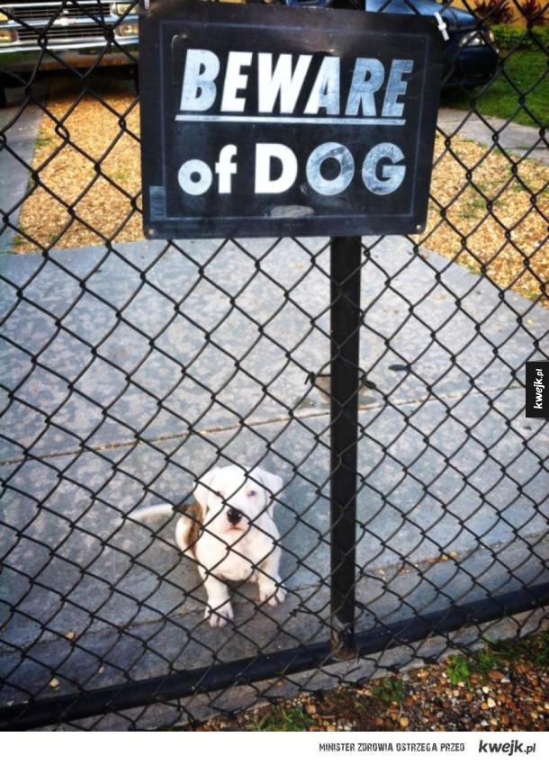 Uwaga! Zły pies!