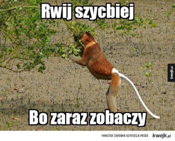 Rwij szybciej Janusz