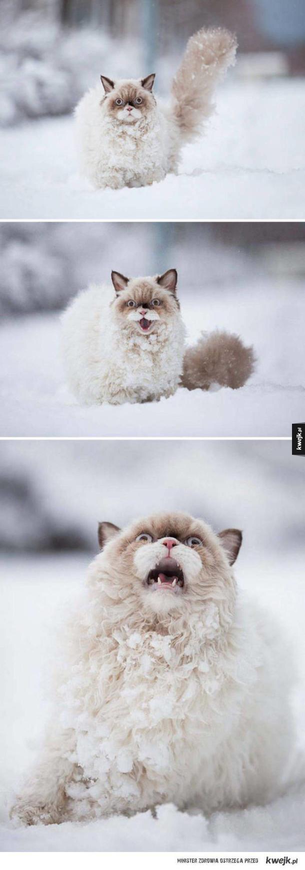 Zabawne reakcje zwierzaków na pierwszy (w życiu) śnieg