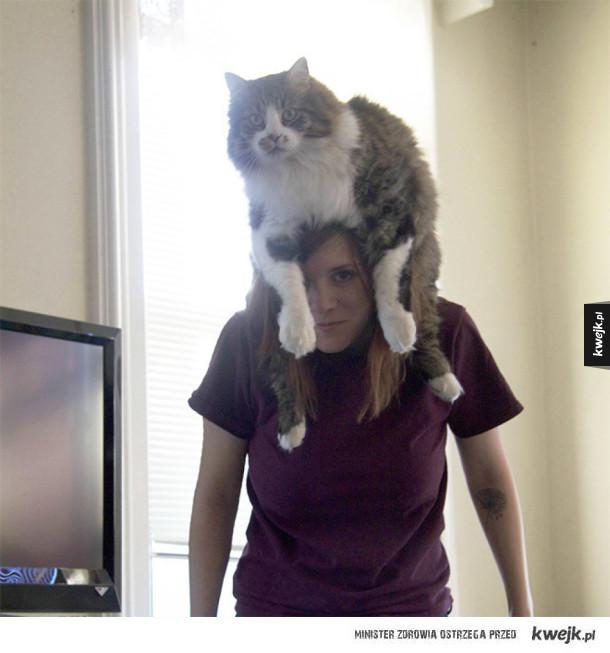 Koty zamiast czapek