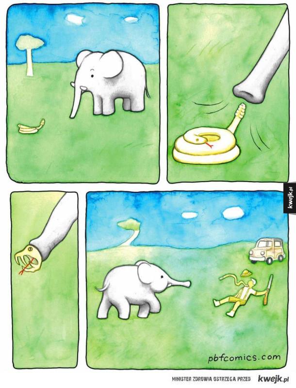 Słoń vs myśliwy