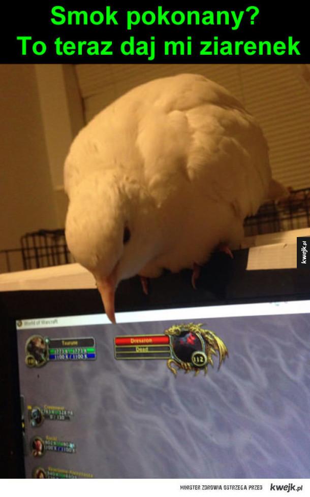 Ptasiek