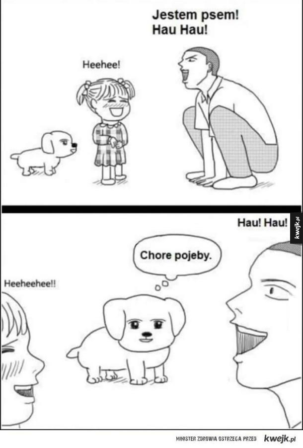 Jak widzi to pies