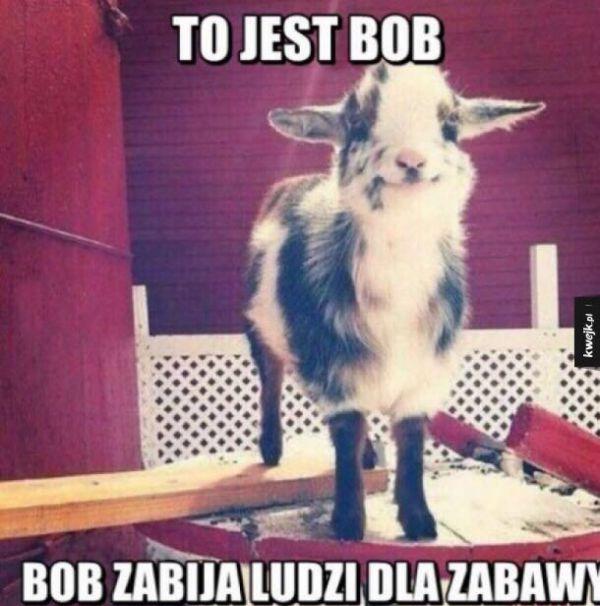 Bądź jak Bob!
