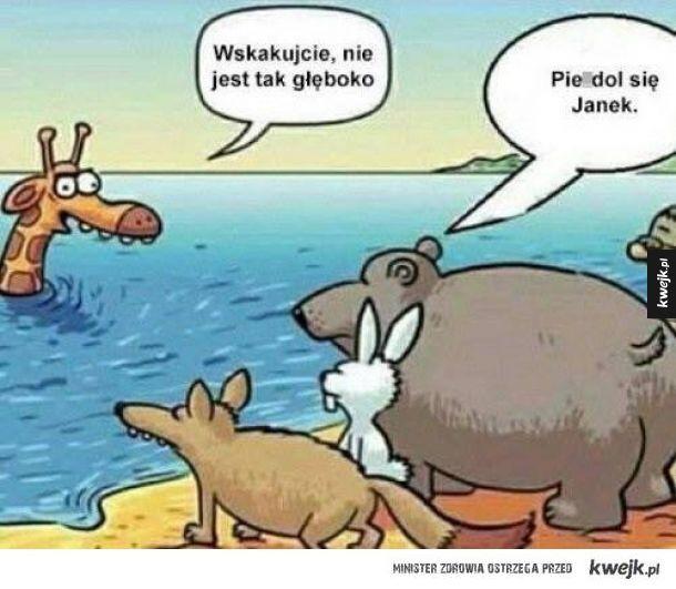 Ach ten Janek