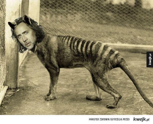 Nicolas Cage jest wszędzie