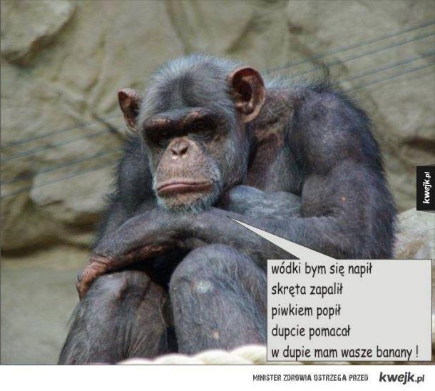 Smutna małpa