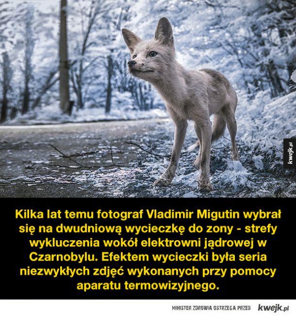 Prypeć 30 lat po katastrofie w obiektywie Vladimira Migutina