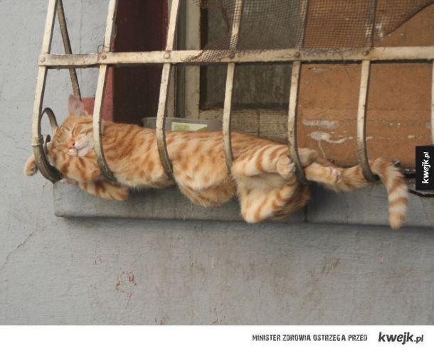 Te zdjęcia udowadniają, że kot jest w stanie zasnąć wszędzie