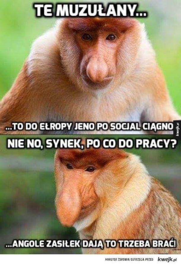 Socjal