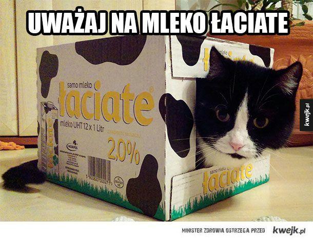 Mleko łaciate niebezpieczne
