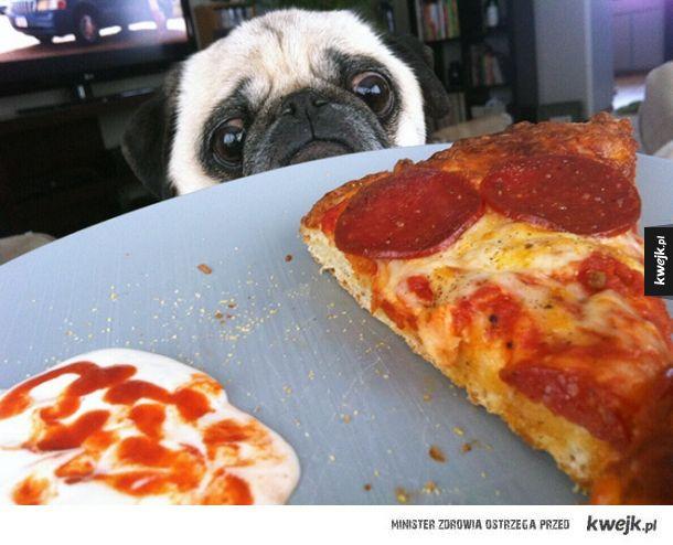 Psy, które czekają aż spadnie Ci coś dobrego do jedzenia!