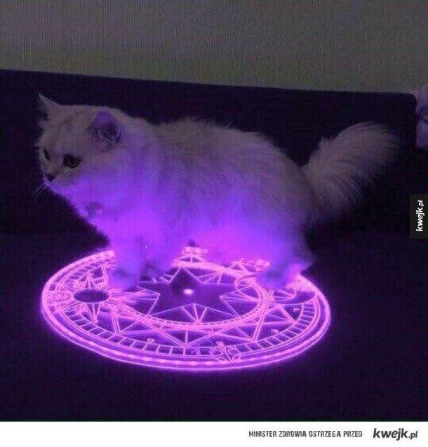 Koty - słudzy szatana