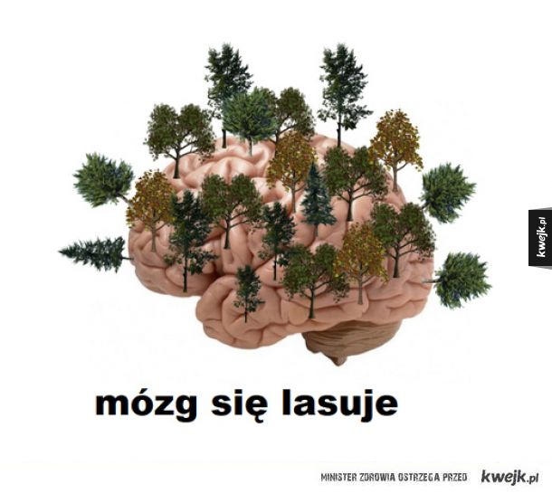 Mózg się lasuje
