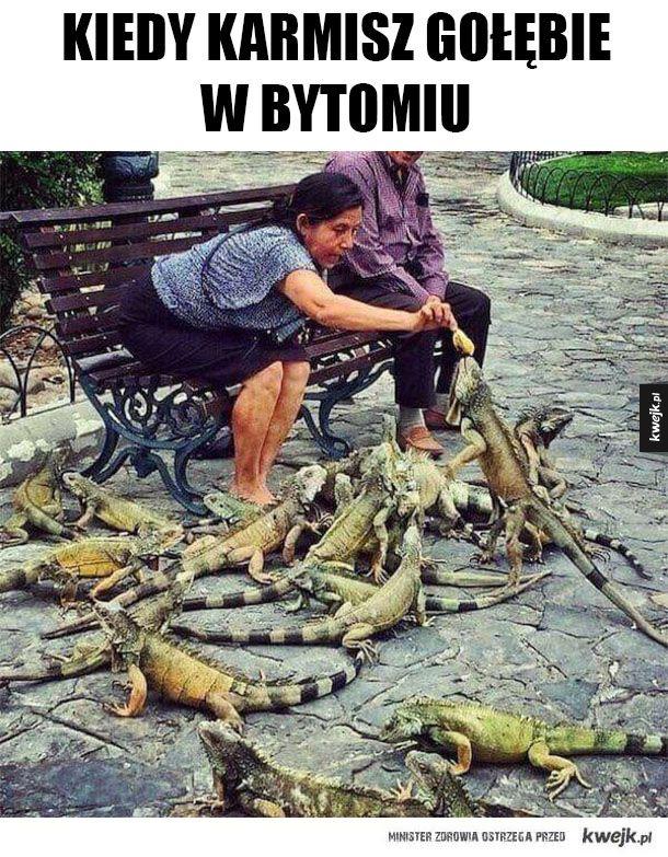 Witamy w Bytomiu