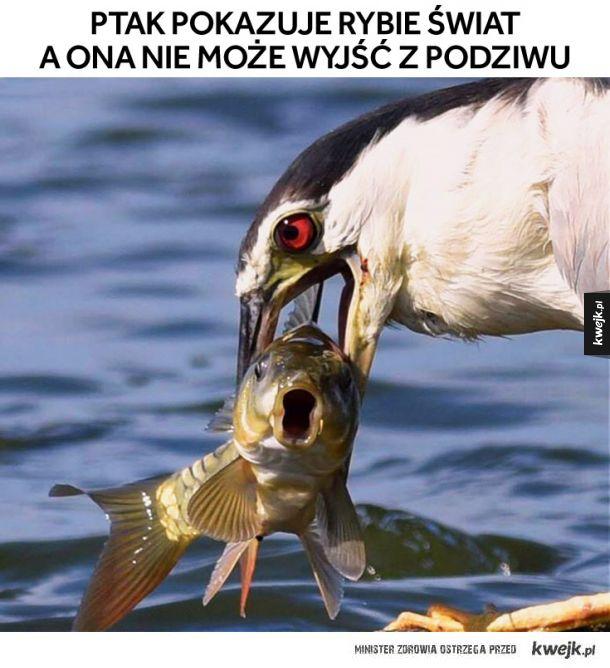 Dobry ziomek ptak