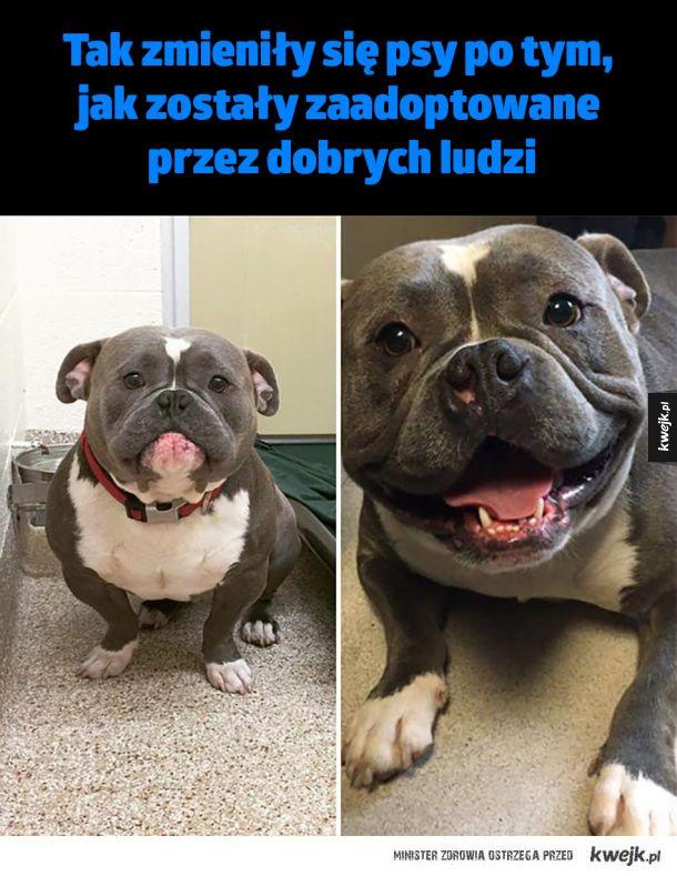 Tak zmieniły się psy po tym, jak zostały zaadoptowane przez dobrych ludzi