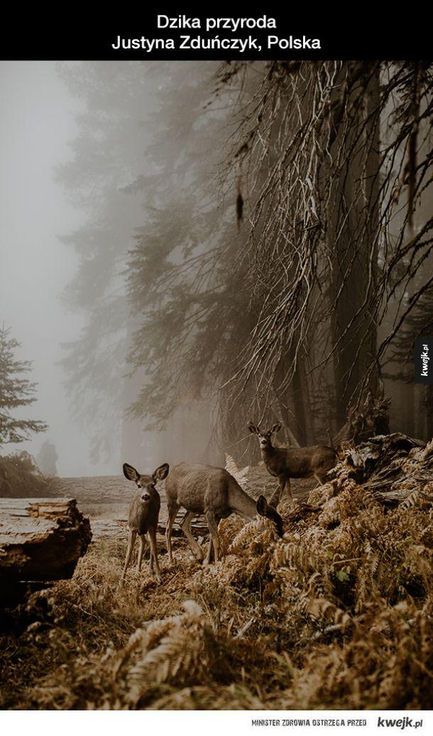 Zwycięzcy konkursu fotograficznego Sony World Photography