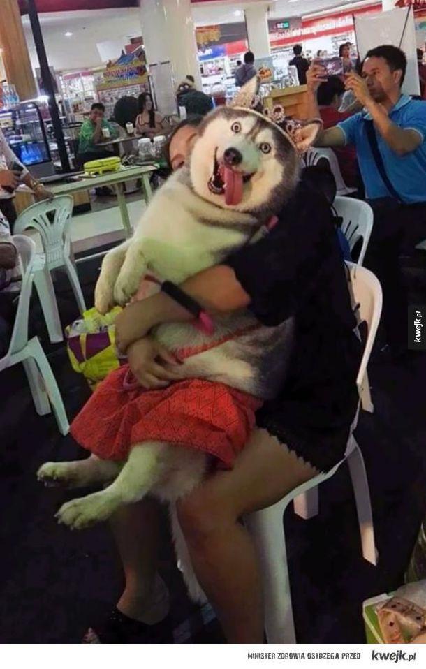 Husky (i malamuty) to najwspanialsze psy na świecie