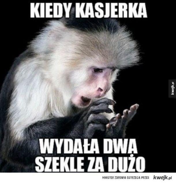 Izraelska małpka