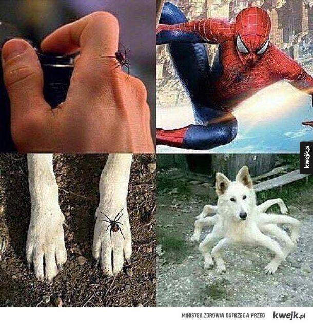 Spider pieseł
