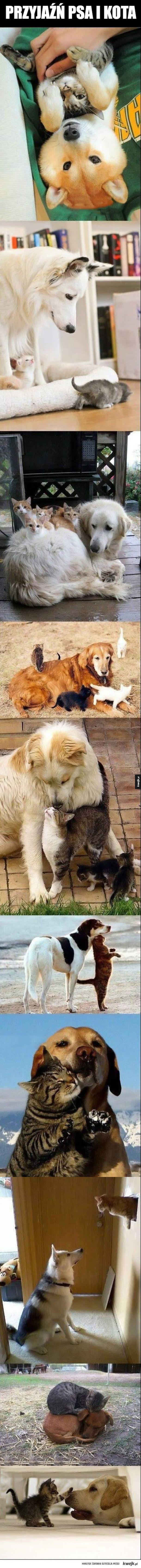 Słodka przyjaźń