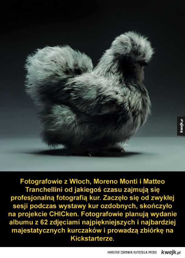 Najpiękniejsze kurczaki w obiektywie włoskich fotografów