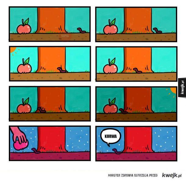Jabłko i robak