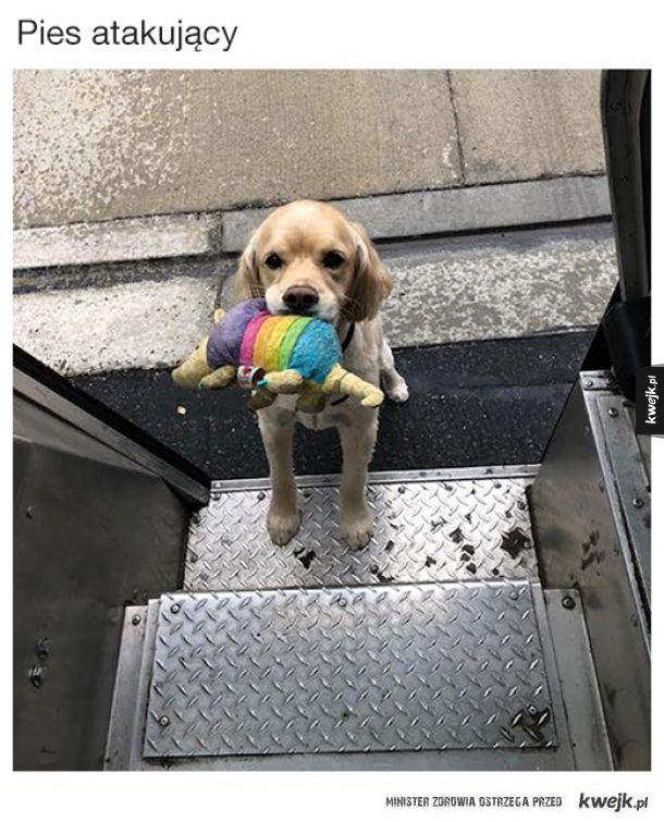 Fanpage UPS Dogs przedstawia zwierzaki, które spotykają amerykańscy kurierzy