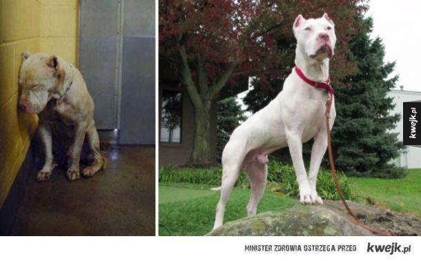 Psy przed i po adopcji to najbardziej niesamowite metamorfozy