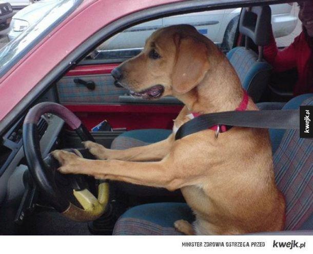 Niezależne psy, które nie potrzebują ludzi