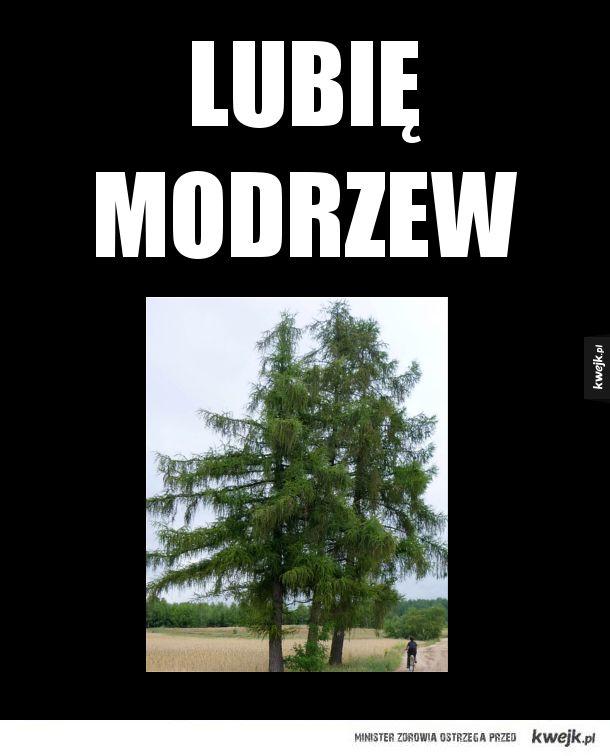 Kreatywne drzewo
