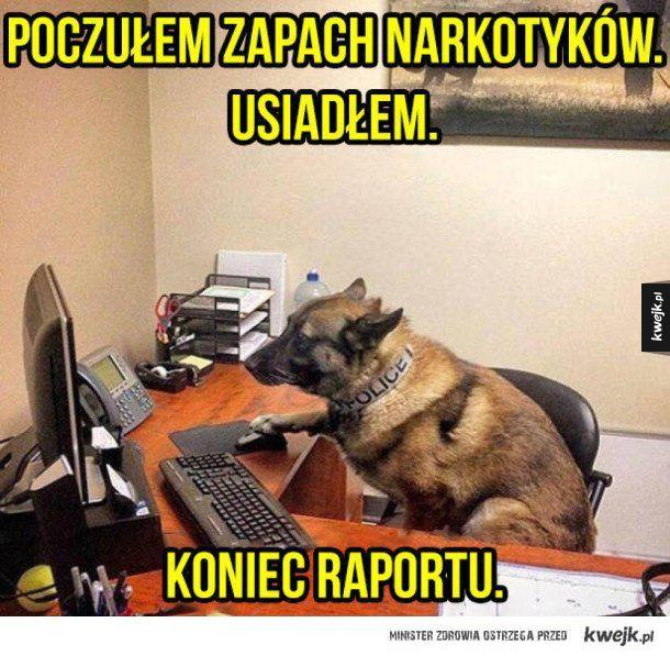 Pies policyjny