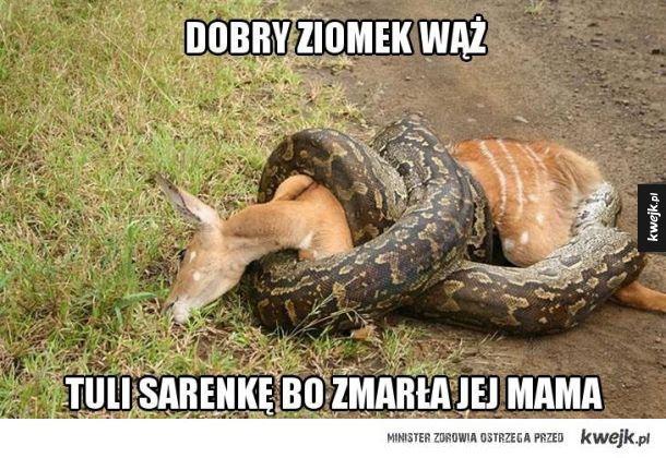 Dobry ziomek wąż