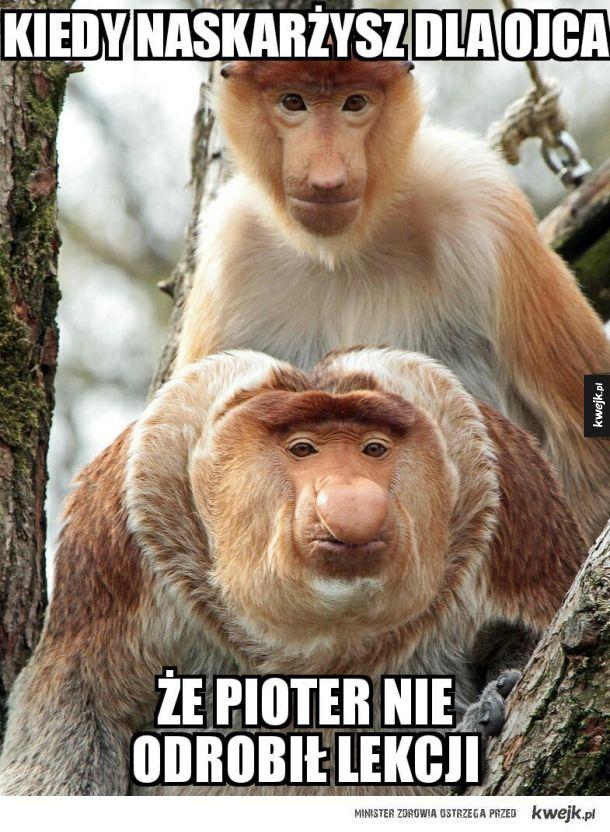 Janusze z Podlasia