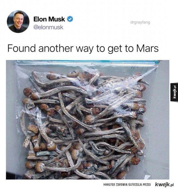 Elon heheszek