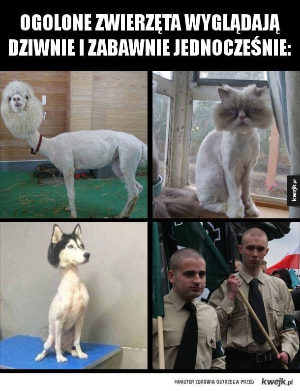 Ogolone zwierzęta