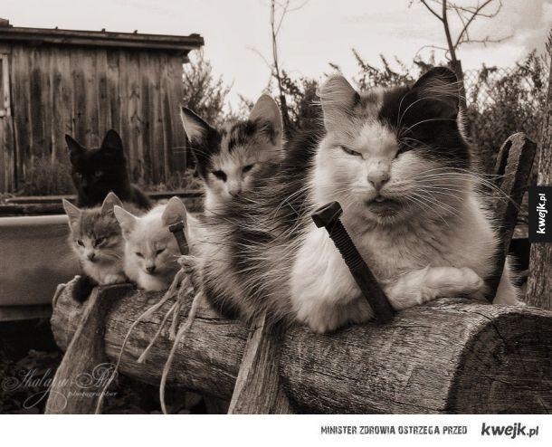 Wiejskie Koty
