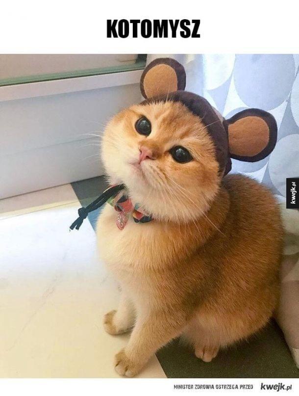 oryginalna czapeczka dla kota