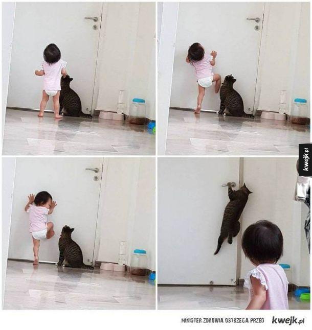 Kot zawsze pomocny