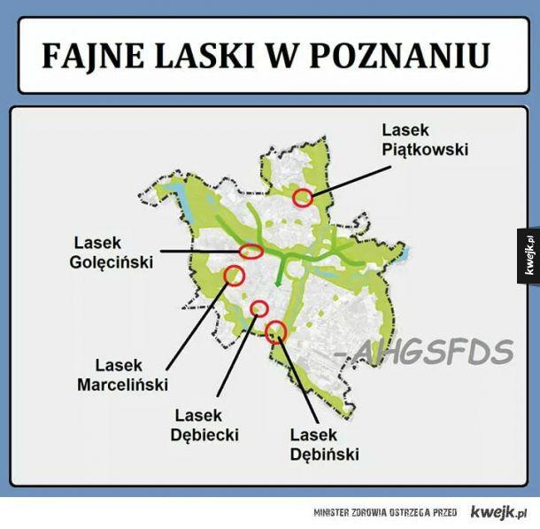 Laski w Poznaniu