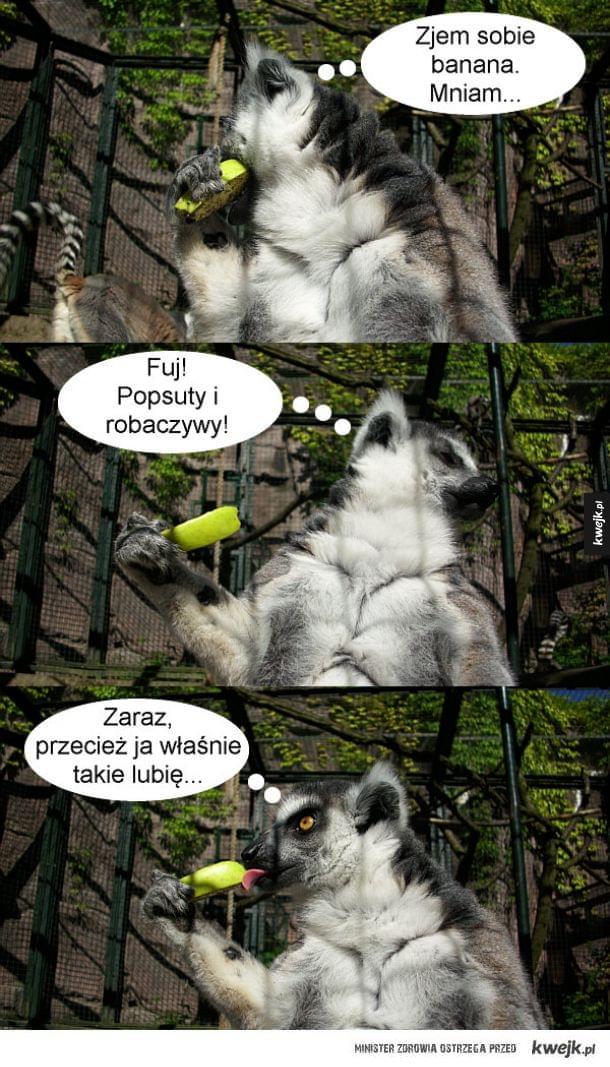 Lemur zwany Bananollo