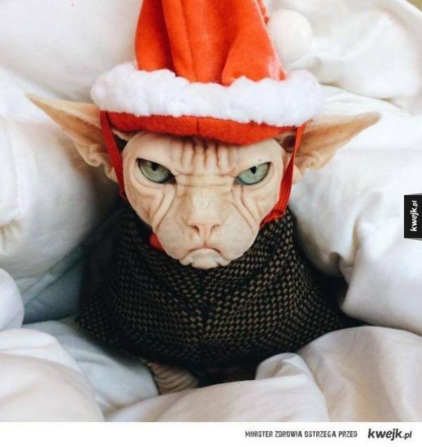 Grumpy Cat może się schować! Poznajcie Lokiego, najbardziej niezadowolonego kota na świecie