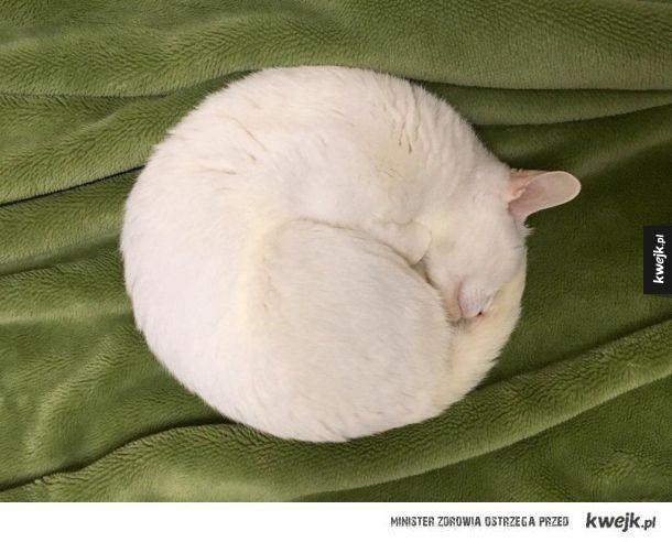 Idealny okrąg